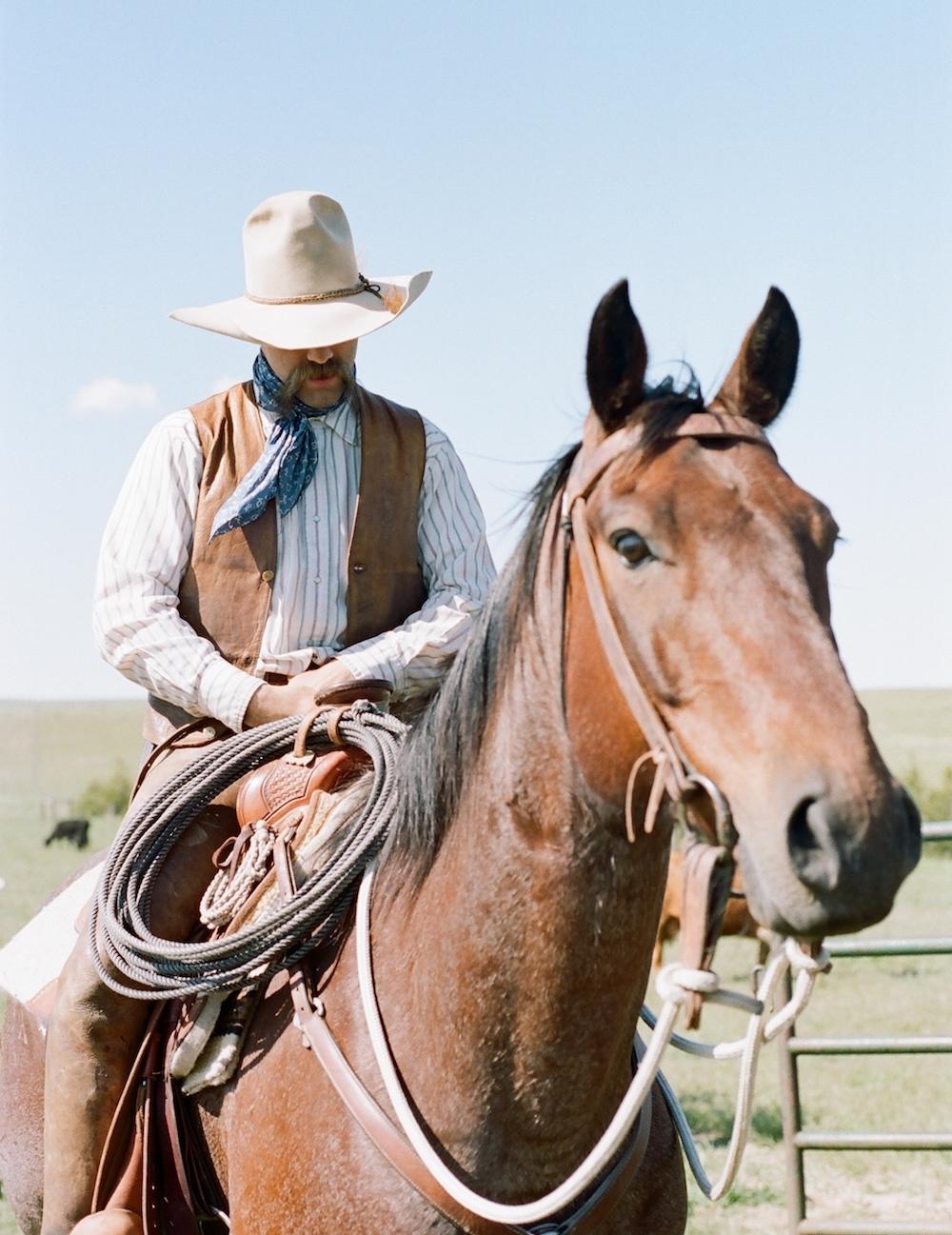 Wyoming cowboy quarter horse