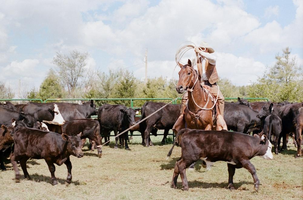 Wyoming branding roping horse