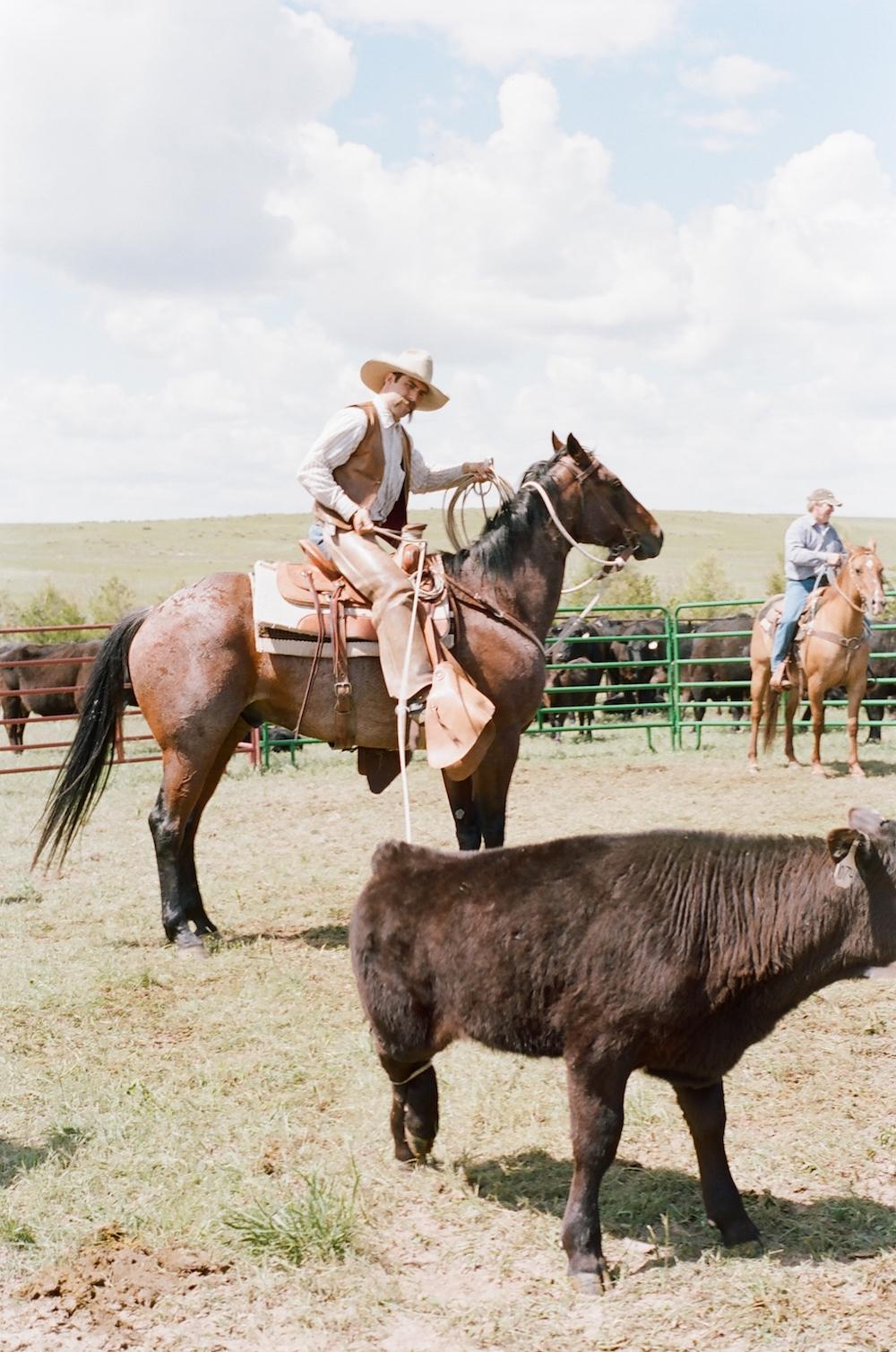 cowboy roping a calf