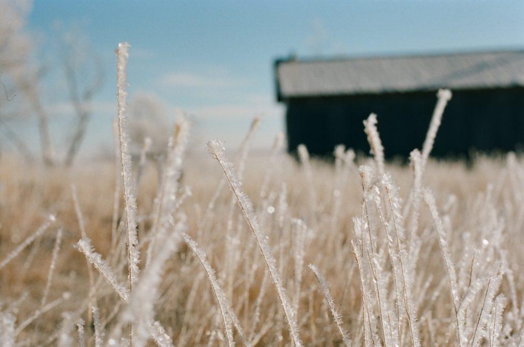 prairie frost