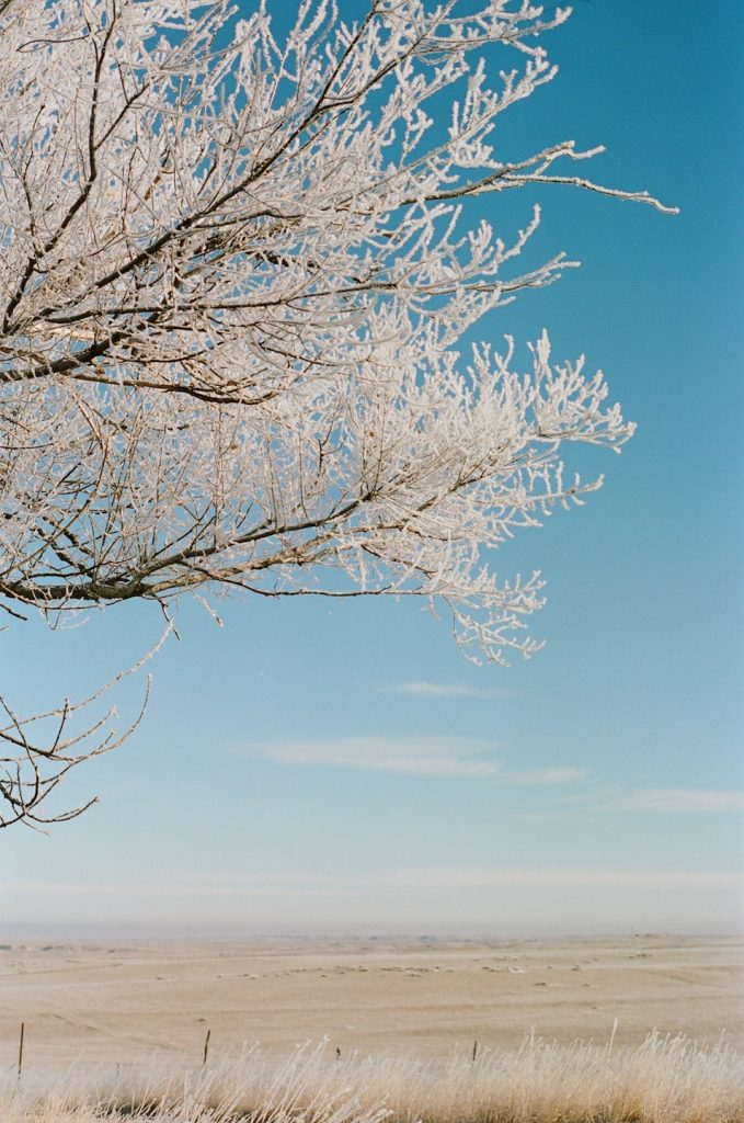 hoarfrost on the prairie